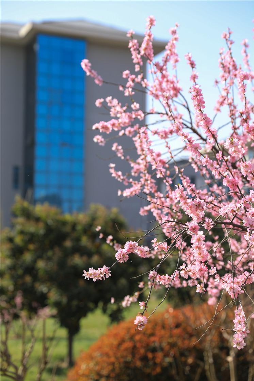 春日里的花儿