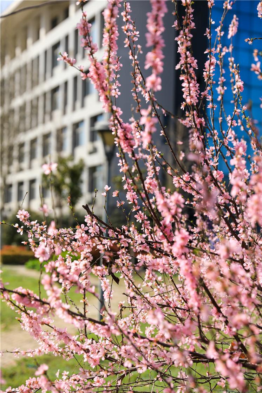 春风花草香